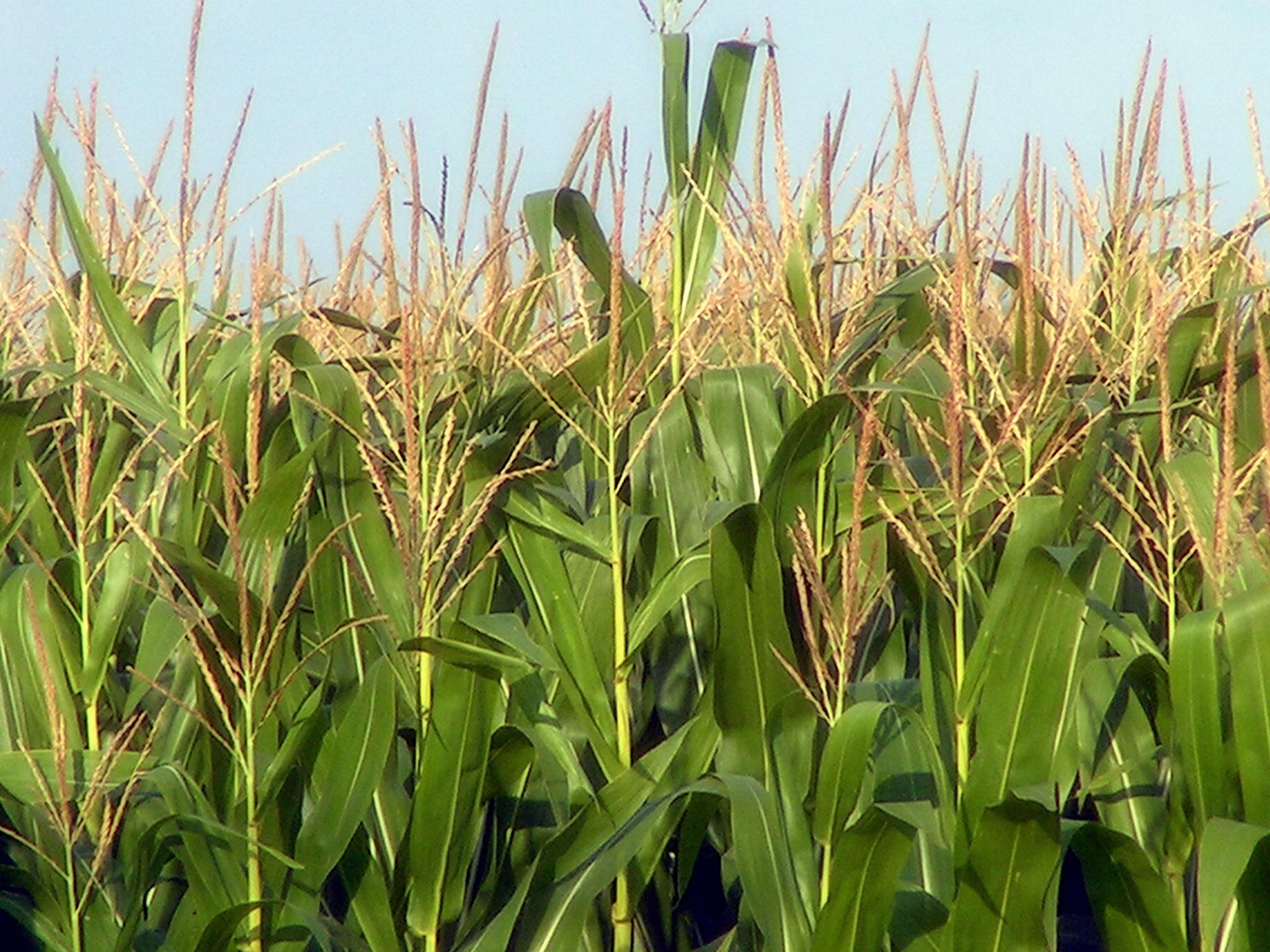 OPIS Ethanol & Biodiesel Information Service